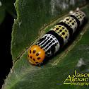 Pale Green Awlet Caterpillar