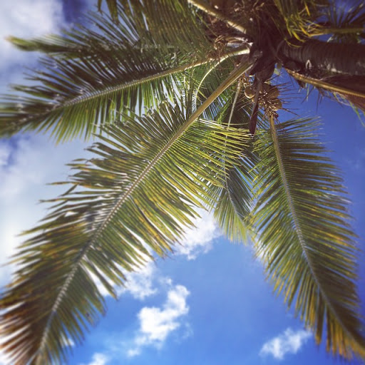Laying under the sun. Only worry is if a coconut falls on you... :)