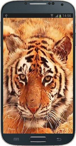 Tiger Licking Screen HD