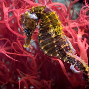 Food by Dale Versteegen - Animals Sea Creatures ( , sea creatures, underwater life, ocean life )