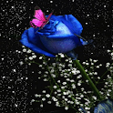 Beauty Blue Rose  Cube LWP logo
