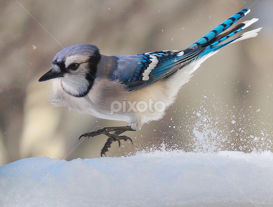 Skid Marks by John Larson - Animals Birds