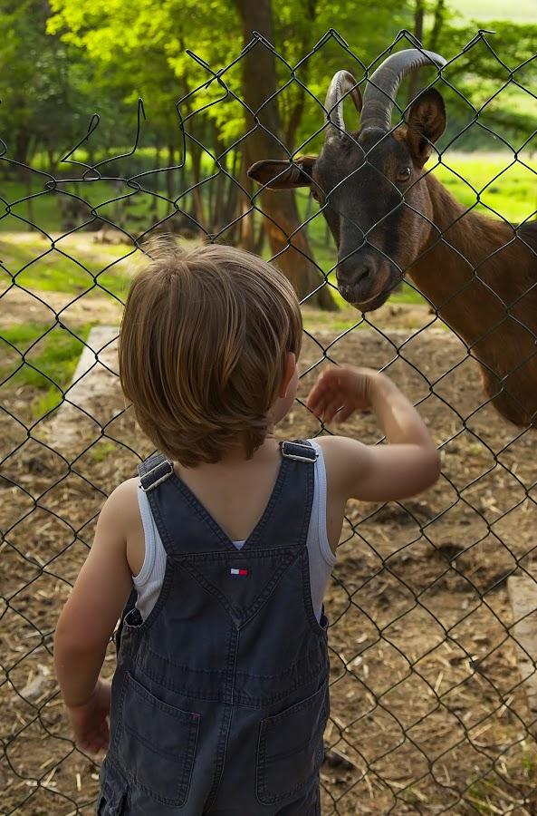 village friend by Maša Pešut Kukina - Babies & Children Children Candids ( village, goat, boy )