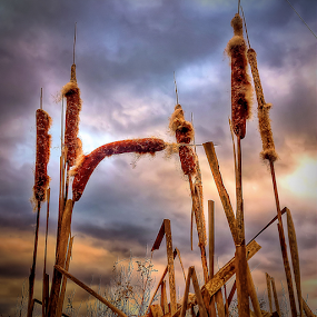 Sedge in warm winter by Oliver Švob - Instagram & Mobile Android ( clouds, sedge, instagram, europe, croatia, close up, sony, sony xperia, winter scene, macro, winter, sky, sky in back, nature, snapshot by malioli, mobile, , color, colors, landscape, portrait, object, filter forge, creativity, lighting, art, artistic, purple, mood factory, lights, fun )