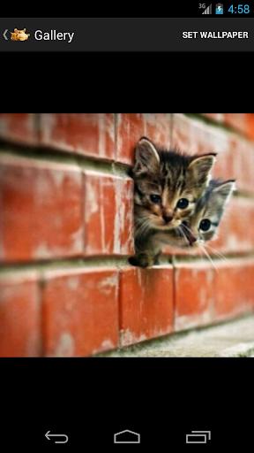 【免費個人化App】Cute Kittens HD-APP點子