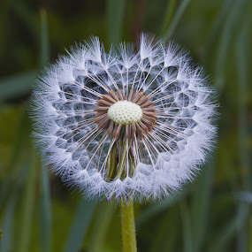 by Louis Heylen - Flowers Flowers in the Wild