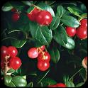 Foxberry壁纸 icon
