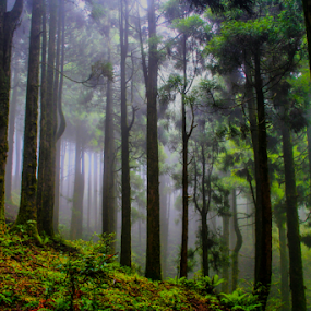 Jungle safari 2 by Mahul Mukherjee - Landscapes Forests ( colour, green, trees, forest, photo )