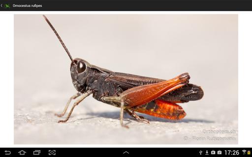 【免費書籍App】Orthoptera-APP點子