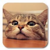 Download Q Cat Live Wallpaper APK for Android Kitkat