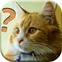 Cats Quiz - All about Cats icon