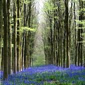 Forests Live Wallpaper