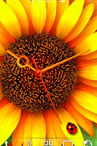 玩免費個人化APP|下載ひまわり*Sunflower ライブ壁紙 トライアル app不用錢|硬是要APP