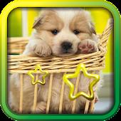 Pet Puppy Free live wallpaper