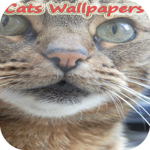 Xperiatipo Cat live Wallpapers 個人化 App LOGO-APP試玩