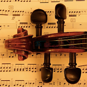 Violin 2014 II by Richard Timothy Pyo - Artistic Objects Musical Instruments ( object, musical, instrument, vertical lines, pwc )
