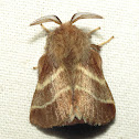 Eastern Tent Caterpillar Moth