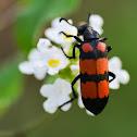 Some kind of beetle