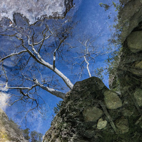 Reflection in a pond by Lauren Carroll - Nature Up Close Other Natural Objects ( grotto hike, california, trees, rocks, river )