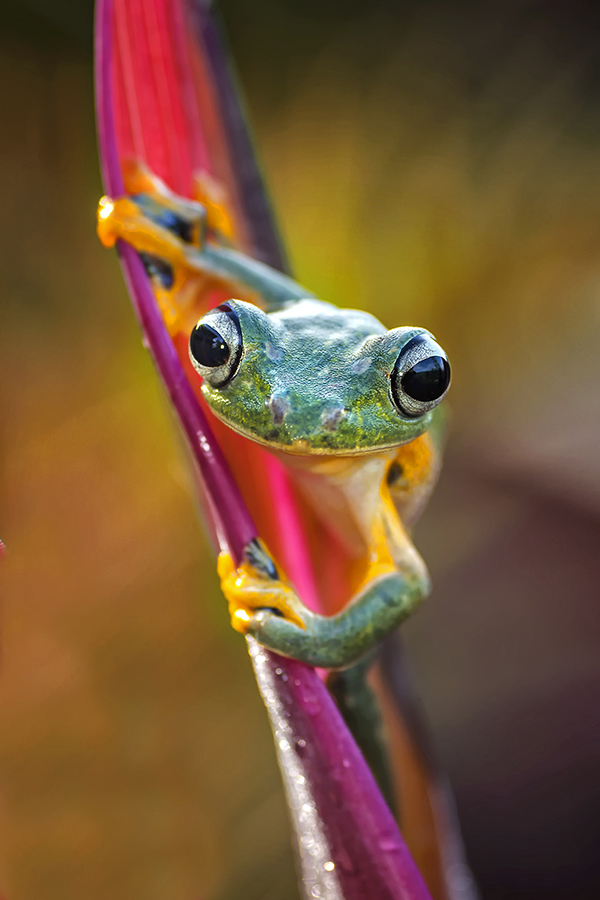 I am not spiderman by Dikky Oesin - Animals Amphibians