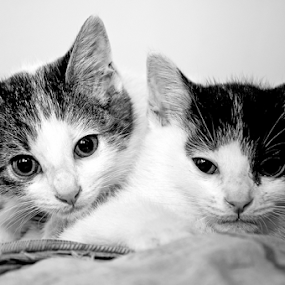 Brothers by Luana Racan - Black & White Animals ( , baby, young, animal )