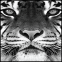 Tiger Lock Screen icon