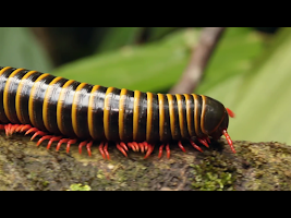 Screenshot of Video Touch - Bugs & Insects