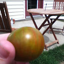 Rambling red stripe tomato