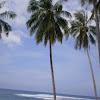 [S] Cononut, kelapa