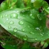 Organic Skin Care Secrets