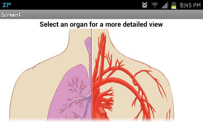 Organ Painter - screenshot