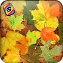 [Shake]Autumn Leaves Wallpaper