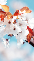 Screenshot of Cherry Blossom for Chat