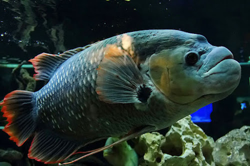 by Nyoto Nugroho Poospo - Animals Fish ( #GARYFONGPETS, #SHOWUSYOURPETS )