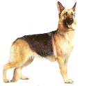 German Shepherds logo