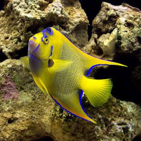 by Helio Santos - Animals Fish
