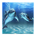 3D Dolphin HD Live Wallpaper