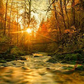 Sun bath by Romain Bruot - Landscapes Forests ( coucher de soleil, waterscape, forest, landscape, pont, sun, pose longue, jura, sunset, long exposure, france, forêt, bridge )