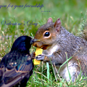 Thank you.. by Angelika Sauer - Typography Quotes & Sentences ( animals, mood, wildlife, fiends, valentine, captioned, close up, birds, emotion, love, sharing, greetings ecards, nature, feeling, food, capture, guest, typography, squirrel, design )