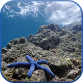 Sea Star Underwater Wallpaper