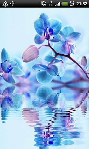 Blue Orchids in Water LWP