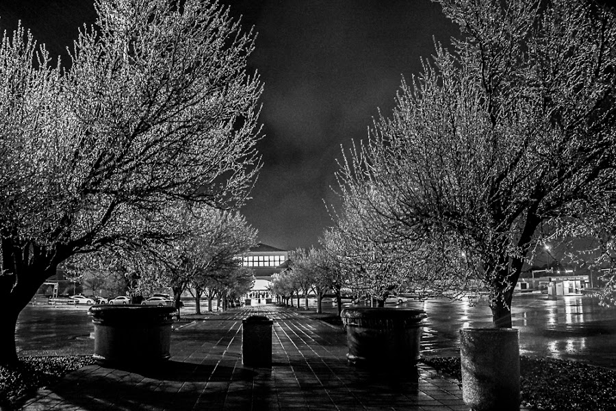 by Jason Holden - Black & White Flowers & Plants