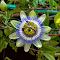 DSC_3959b.jpg