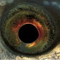 Vissengids logo