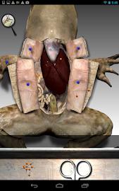 Froguts Frog Dissection Screenshot 11