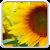 Sunflower Live Wallpaper file APK Free for PC, smart TV Download