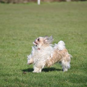 by Gav Wyatt - Animals - Dogs Running