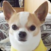 犬写真集⑤ ボビィ