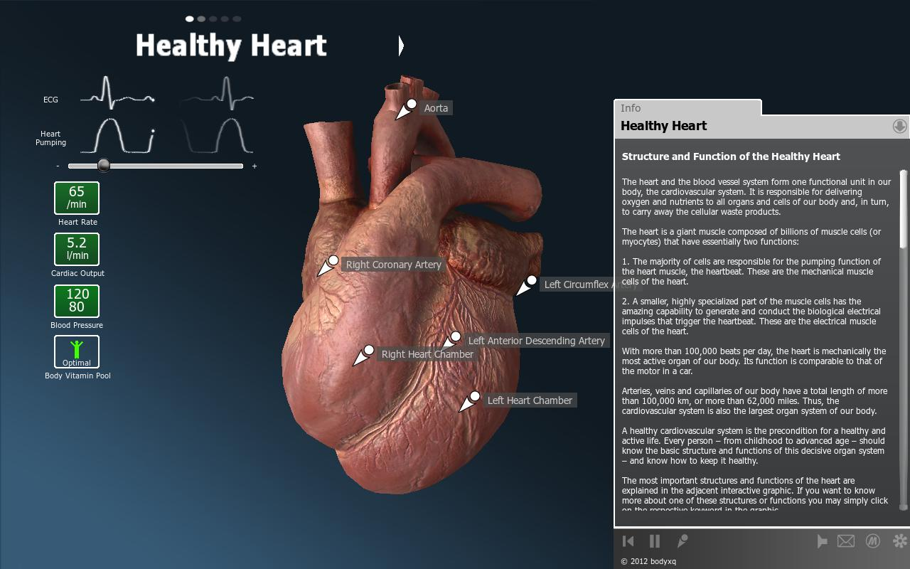 bodyxq heart - screenshot