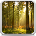 Sunny Forest Live Wallpaper